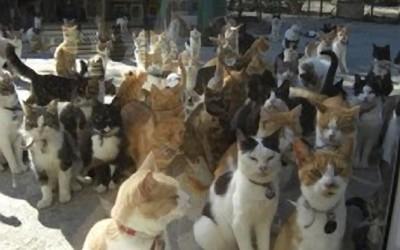 Cat Sanctuary Long Island Ny