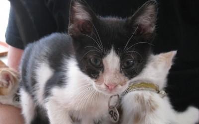 Rorry, Kitten No. 45
