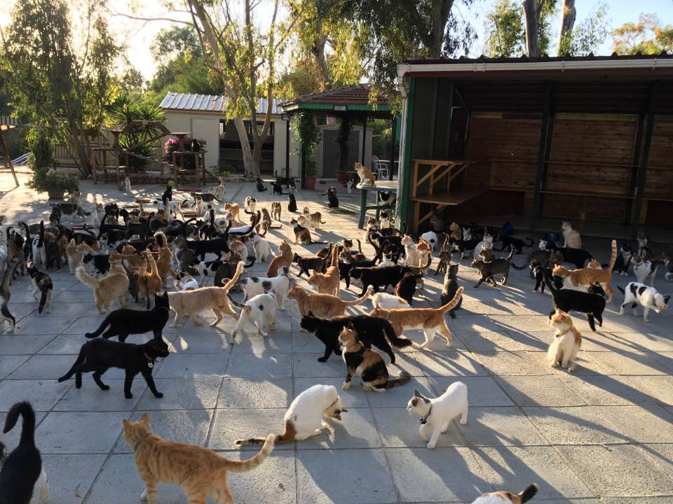 Lots Of Cats Www Pixshark Com Images Galleries With A